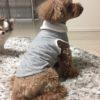 『おうちで作る、イヌの服』★型紙サイズの直し方も★ワン達に着せてみた